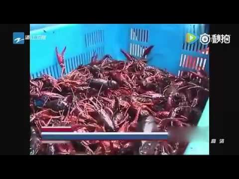 把小龍蝦放進清洗機,看的人都嚇傻了!