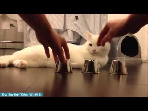 Đọc Suy Nghĩ Động Vật - Suy Nghĩ Mèo Và Chuột (Phần 2)