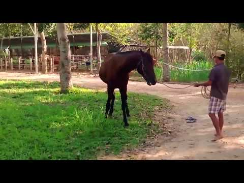 Video Please Subscribe | Funny Animals Mating | Horse Mating | Viral Videos download in MP3, 3GP, MP4, WEBM, AVI, FLV January 2017