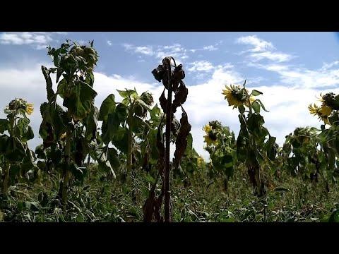 Bauernverband fordert Hilfen von einer Milliarde Euro