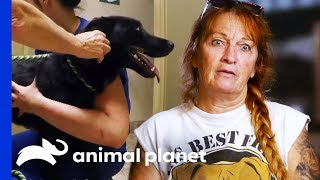 Stray Dog Needs Treatment For Severe Sunburn | Pit Bulls & Parolees by Animal Planet