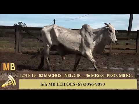 188º LEILÃO VIRTUAL MB LEILÕES