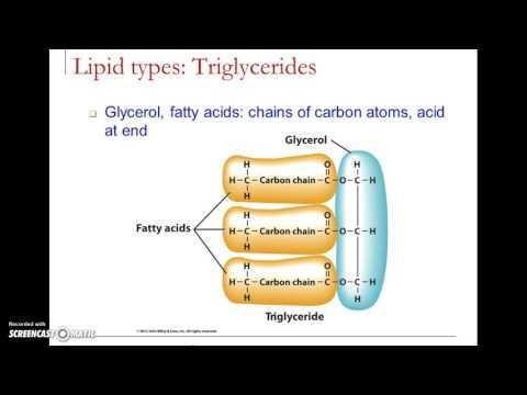 Lipids lecture video 1