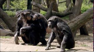 Video Animals Like Us : Animal Emotions - Wildlife Documentary MP3, 3GP, MP4, WEBM, AVI, FLV November 2018