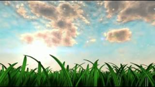 Swaying Grass Live Wallpaper YouTube video