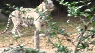 Chiang Mai Zoo: Travel Journey - Chiang Rai&Chiang Mai (Thailand)