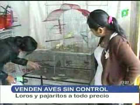VENTA DE AVES SIN CONTROL.flv