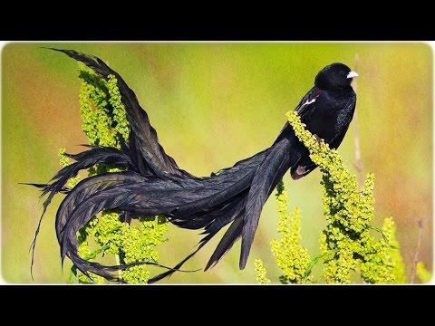 Самые редкие и удивительные птицы