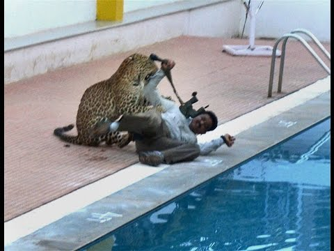 A spotted leopard was found wandering inside a school in India's Karnataka state.