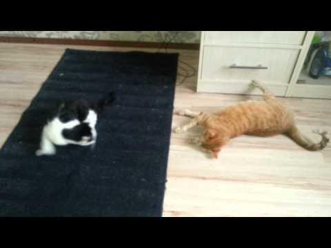 Дал своим кошкам нюхнуть валерианы корня.