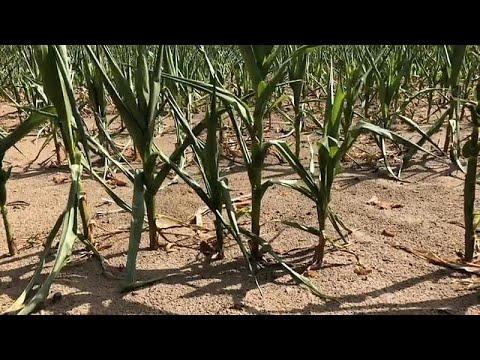 Dürre-Hilfe: 340 Millionen Euro für die deutschen Bauer ...