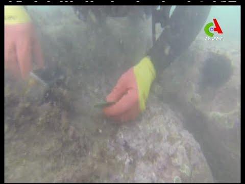 Cherchell: Première opération de prospection et de fouille du patrimoine archéologique maritime