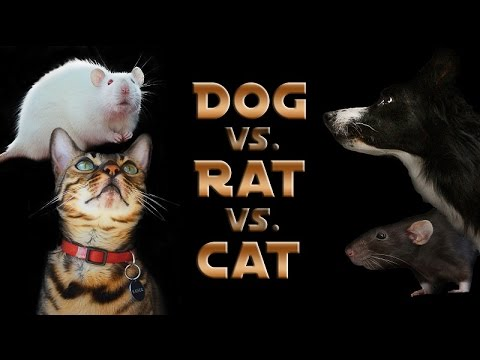 Youtube Cat Vs Dog A Trick Contest