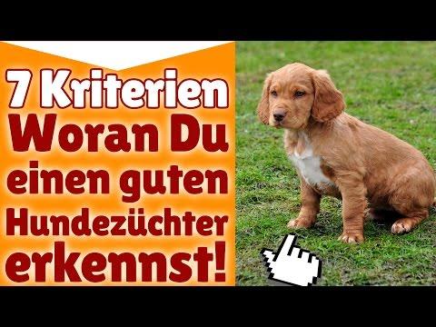 Hundezüchter - 7 Kriterien - Woran Du einen guten Hu ...
