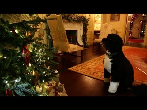 bo - Bo makes a final inspection of the 2012 White House Christmas decorations before 90000 visitors come through the doors of the People's House this holiday se...