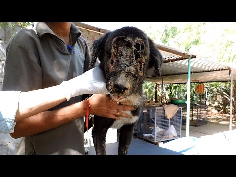 This Dog Who Grew A New Face [Amazing Video]