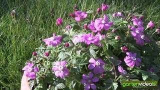 Die Blüte von Arom