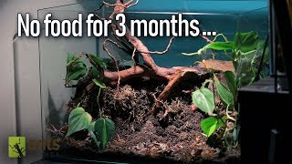 Video How My Ants Remarkably Survived a Famine MP3, 3GP, MP4, WEBM, AVI, FLV Januari 2019