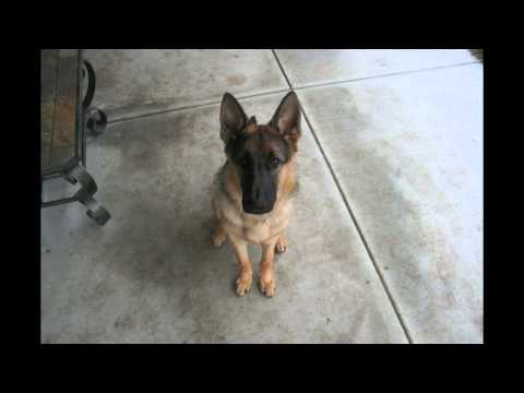Time Lapse: Puppy to Adult in 40 seconds. Dunder