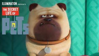 The Secret Life of Pets - Meet Mel (HD) - Illumination full download video download mp3 download music download