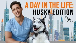 Video A Day in the Life: Siberian Husky Edition | Doctor Mike MP3, 3GP, MP4, WEBM, AVI, FLV April 2018