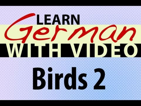 Learn German with Video – Birds 2