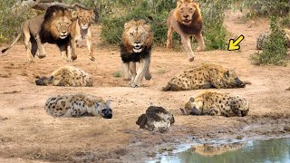 Video OMG! King Lion destroy Hyena cubs stupid go into his territory! Epic battle of King Lion Vs Hyena MP3, 3GP, MP4, WEBM, AVI, FLV Juni 2019