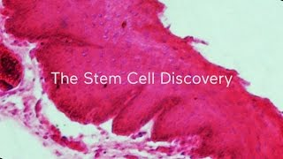Dinner with Scientists: The stem cell discovery