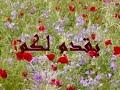☆ الراوي أحميدة عيسي الخفيفى ☆