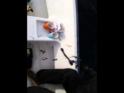 Visdag met Guus, Martin en Frank met een boot van VVP Verhuur