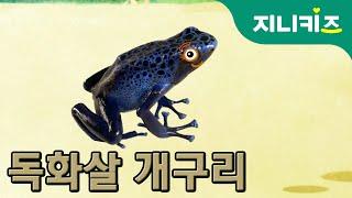 독화살 개구리(Poison Arrow Frog) | 지구에서 가장 강한 독 | 생생자연도감 | 어린이 자연관찰 Kids Science | 과학동화