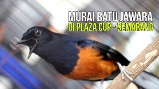 Video Aksi Maut Murai Batu Juara Di Plaza Cup Semarang MP3, 3GP, MP4, WEBM, AVI, FLV September 2018