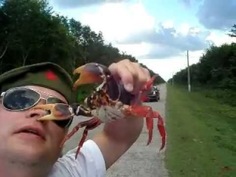 不要以為螃蟹是好欺負的!