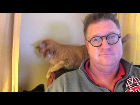 vivere-con-un-cane-e-un-gatto