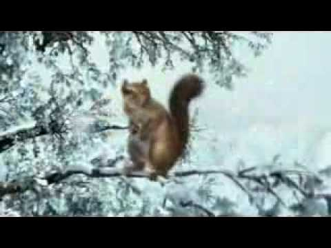 Farting Squirrel commercial A Fresh Air Explosion