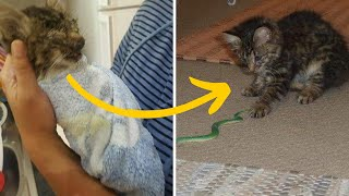 Sick Kitten Is Rescued By The Perfect Family To Help Her Get Better by Did You Know Animals?