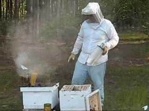 Bees for beginners part 4