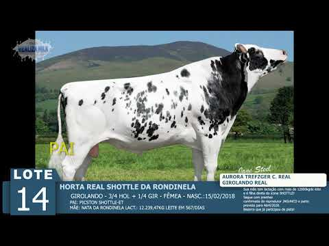 LOTE 14 - HORTA REAL SHOTTLE -