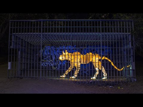 Video 1000 dibujos con luz forman una stop-motion espectacular de Arte