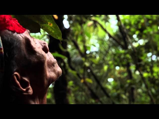 Pohon Tua- #SiapaLagiKalauBukanKita
