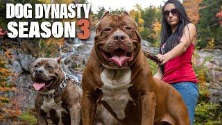 Dog Dynasty: Entire Season 3 (1 Hour 20 Min) by Barcroft Animals
