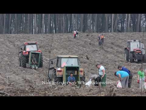 Wideo1: Sadzenie lasu na terenie Nadleśnictwa Włoszakowice