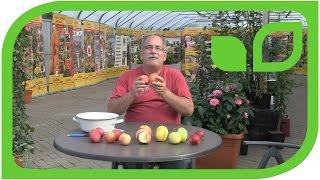 Paradis Ninifee - der Honigapfel
