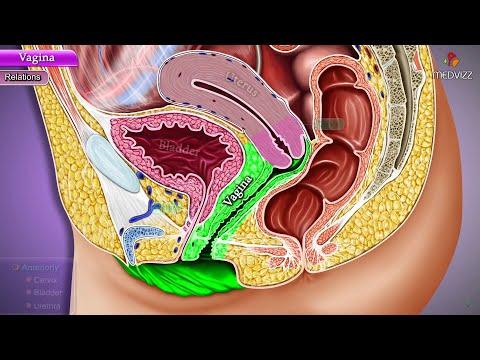Vagina Anatomy - Histology, Blood supply, Nerve supply, Lymphatic Drainage & Clinical anatomy