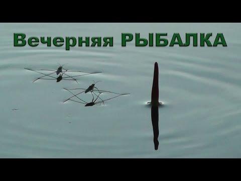 видео ловля крупного окуня на поплавок