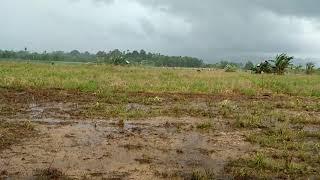 Video Hujan badai turun saat petani ini lagi nyangkul sawah MP3, 3GP, MP4, WEBM, AVI, FLV Juli 2018
