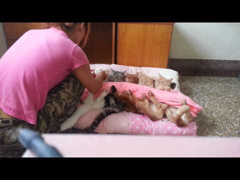 可愛貓咪~ 我家的5寶 躺一起蓋棉被 好萌好可愛