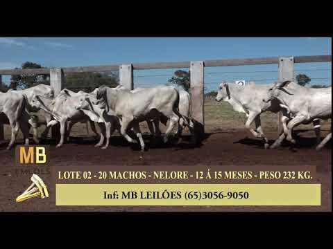 254º LEILÃO VIRTUAL MB LEILÕES