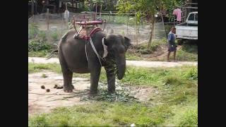 A Taste Of Thailand Tour Phuket - Things To Do Elephant Riding And ATV (Part 5)