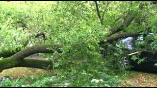 Tree crushes two vehicles on Lonsdale - Sudbury News